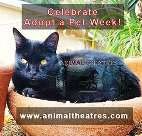Animal Theatre